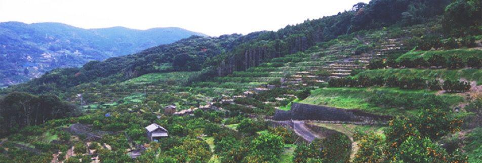 山野果樹園